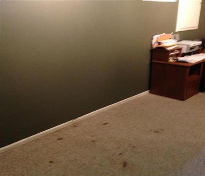 Mold Removal and Remediation in Caldwell Before