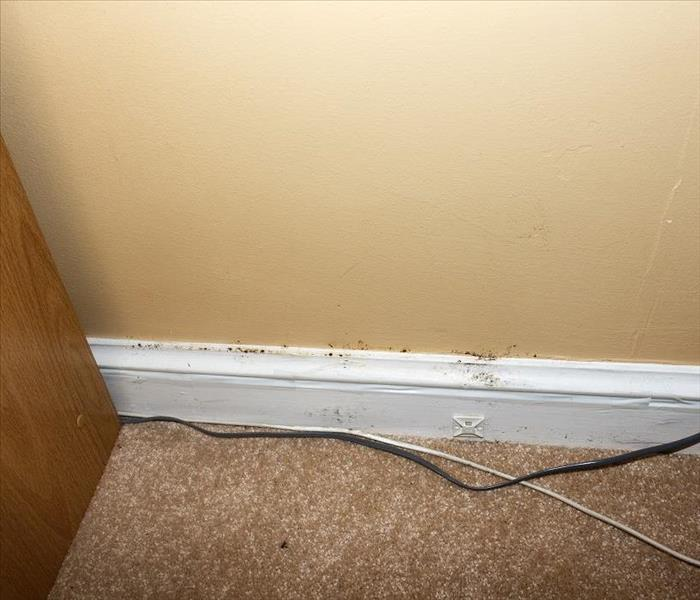 Mold Remediation Tips to Prevent Mold Damage from Ruining Your Nampa Home