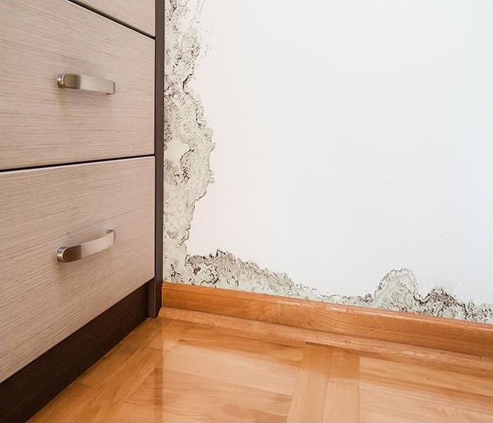 Mold Remediation What Can Be Done To Confirm A Mold Damage Problem In Caldwell?
