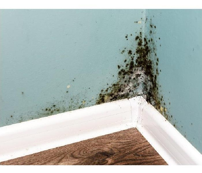 Mold Remediation How Professionals Remediate Mold From Your Nampa Home