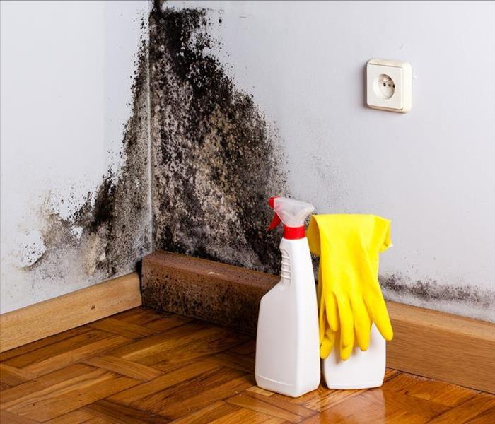 Mold Remediation Removing Mold Damages from Your Nampa Residence